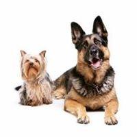 Furry Logic Home Dog Training