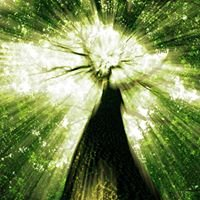Forest Spirit Healing