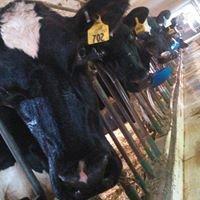 Stewardship Dairy Reg. Holstein & Milking Fleckvieh