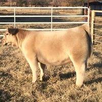 Harris Cattle Co