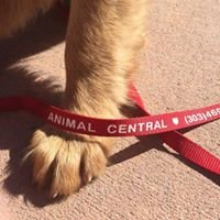 Animal Central