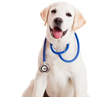 Animal Surgery and Advocacy Services