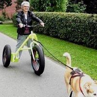 Hadhi-dog-Trike