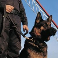 High Powered K9 Security