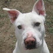 Butte-Silver Bow Animal Services