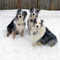 Professional Pet Partners, Inc.