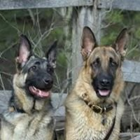 Pittsburgh Dog Training