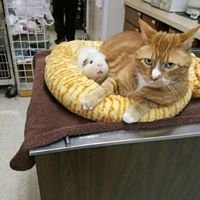 Paw Patch Animal Hospital