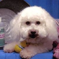 Dog N' Suds Pet Grooming and Boarding