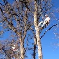 Angeleri Brothers Tree Care