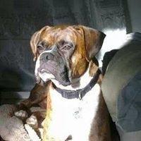 Furever Care  Concierge Pet Sitting