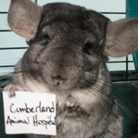 Cumberland Animal Hospital