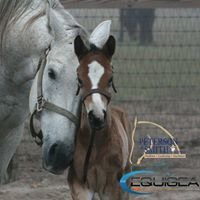 Peterson & Smith Equine Reproduction Center