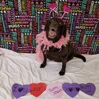 Canine Rehabilitation at Windcrest