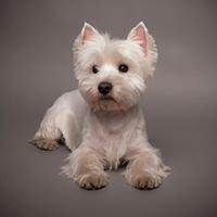 Silver Dog Grooming Salon