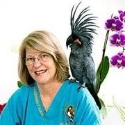 Rainforest Clinic For Birds & Exotics