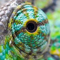 Reptile Pets Direct