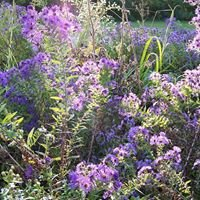 Prairiescape Native Plants and Raingardens