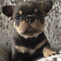 Pups R US