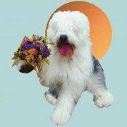 Moon Doggie Gardens