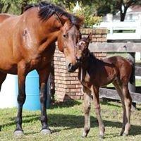 Erinwood Sporthorses