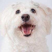 Lucy Goo Pet Sitting LLC
