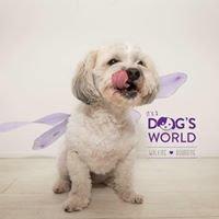 Dog's World Walking