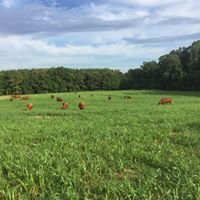 Presnell Red Angus