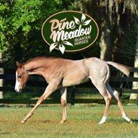 Pine Meadow Quarter Horses
