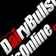 Dairybullsonline