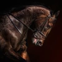 Sharon Castro Photography