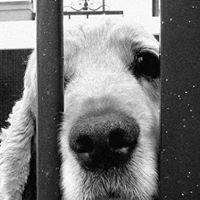 No Kill Animal Rescue of America