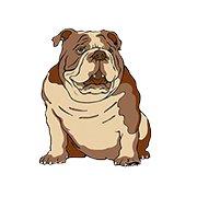Bulldogs Feed Company