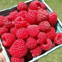 Lindy's Berries