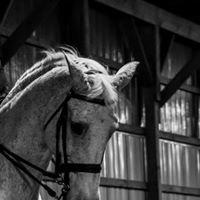 Fox Run Equestrian LLC