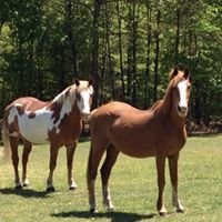 Cabin Point Veterinary Hospital and Equine Service