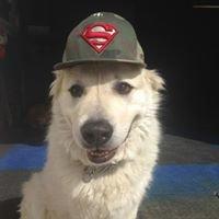 Happy Dog Daycare