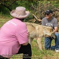 LuvPup Pet Sitting & Dog Training