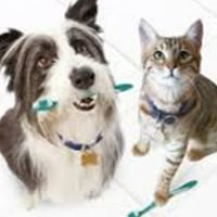 Gretna Animal Clinic P.C.