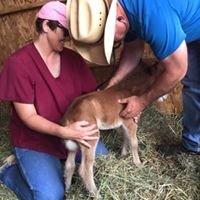 Shafer Equine Services