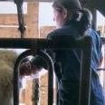 Keywood Animal Clinic LLC