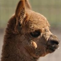 Harmony Hill Ranch Alpacas - Designs in Harmony