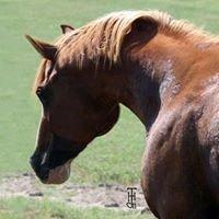 Ridge Haven Equine
