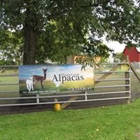 Thistle Creek Alpacas