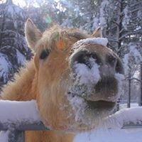 Dover Equine Veterinary