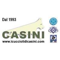 I Cuccioli di Casini