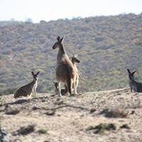 Kalbarri Outback Action