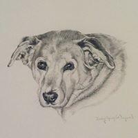 The Dog Sketcher