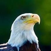Eagle Property Service, LLC.