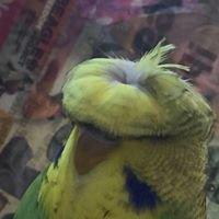 Anza Avian Refuge